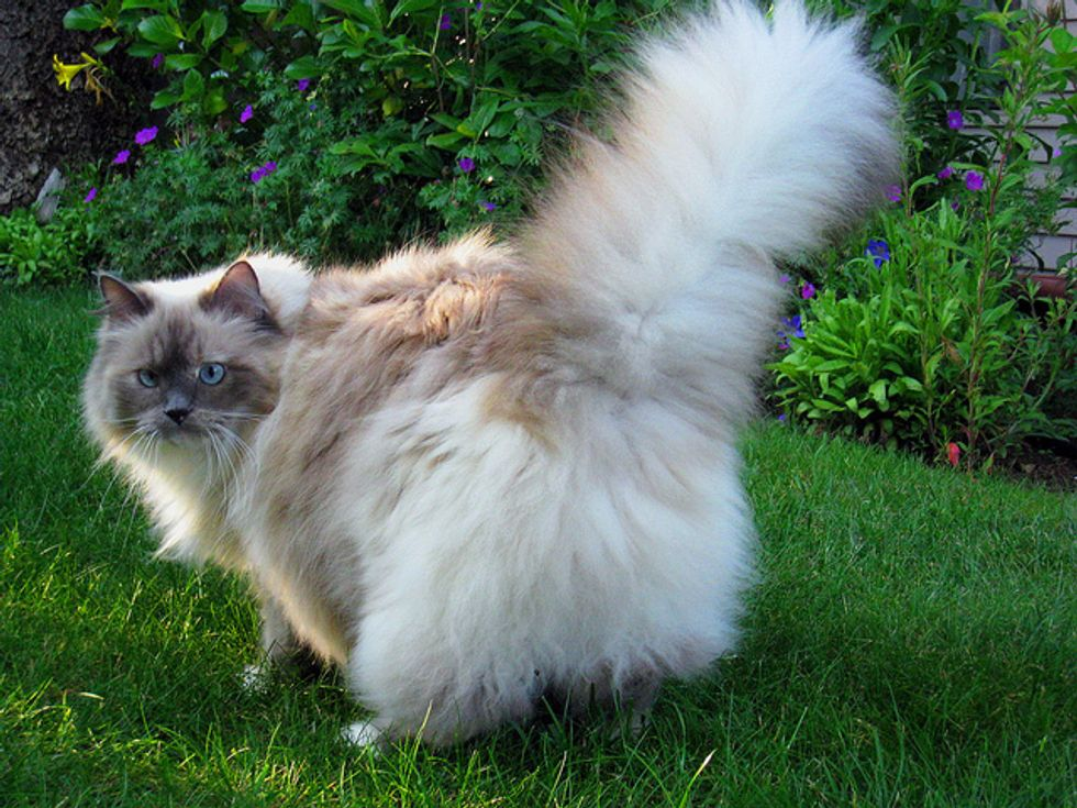 Story of Lacey the Fluffy Rescue