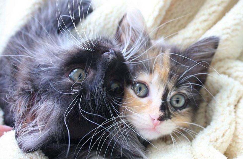 Peabody Kittens