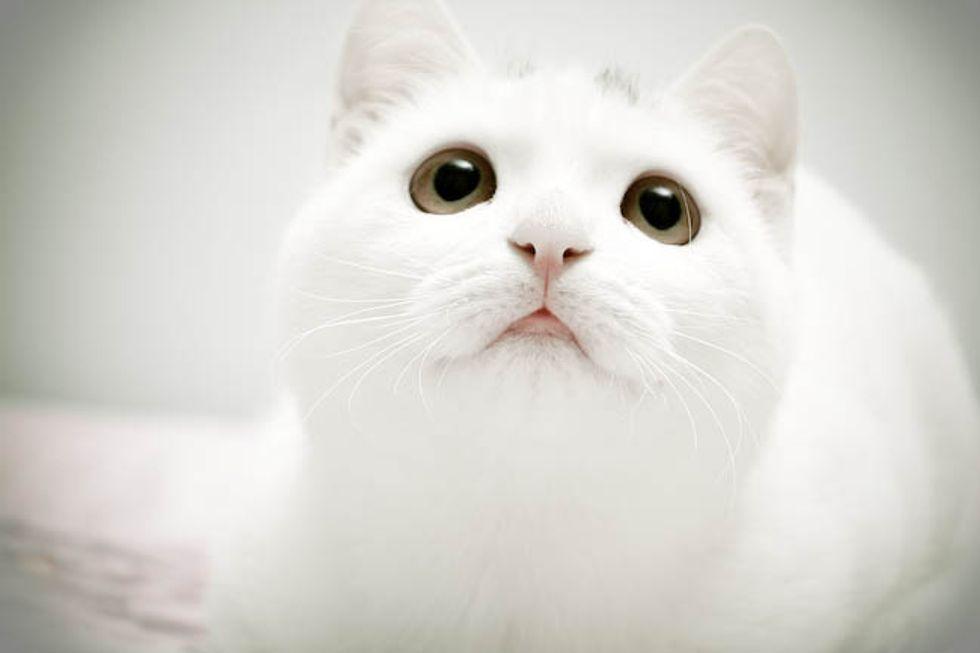 White Fur Baby