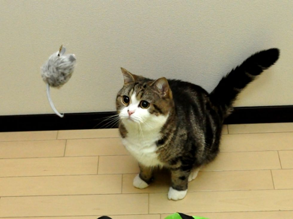 Maru and His Mousie
