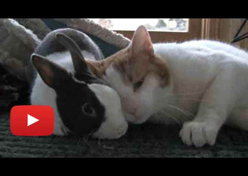 Kitty Loves Bunny