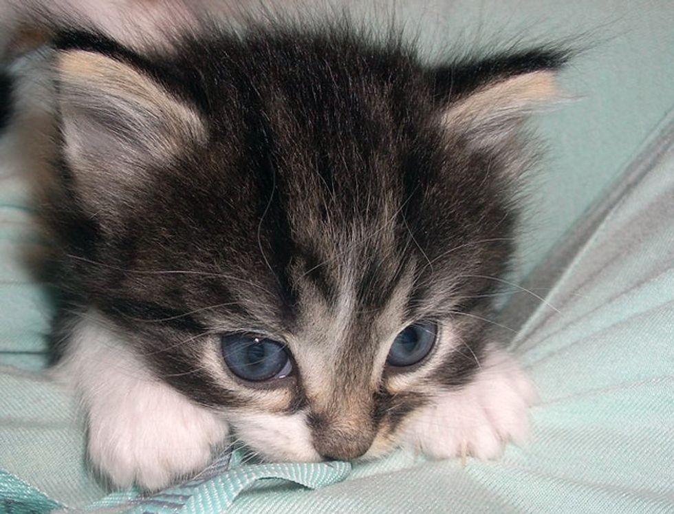 Three Frisky Foster Kittens