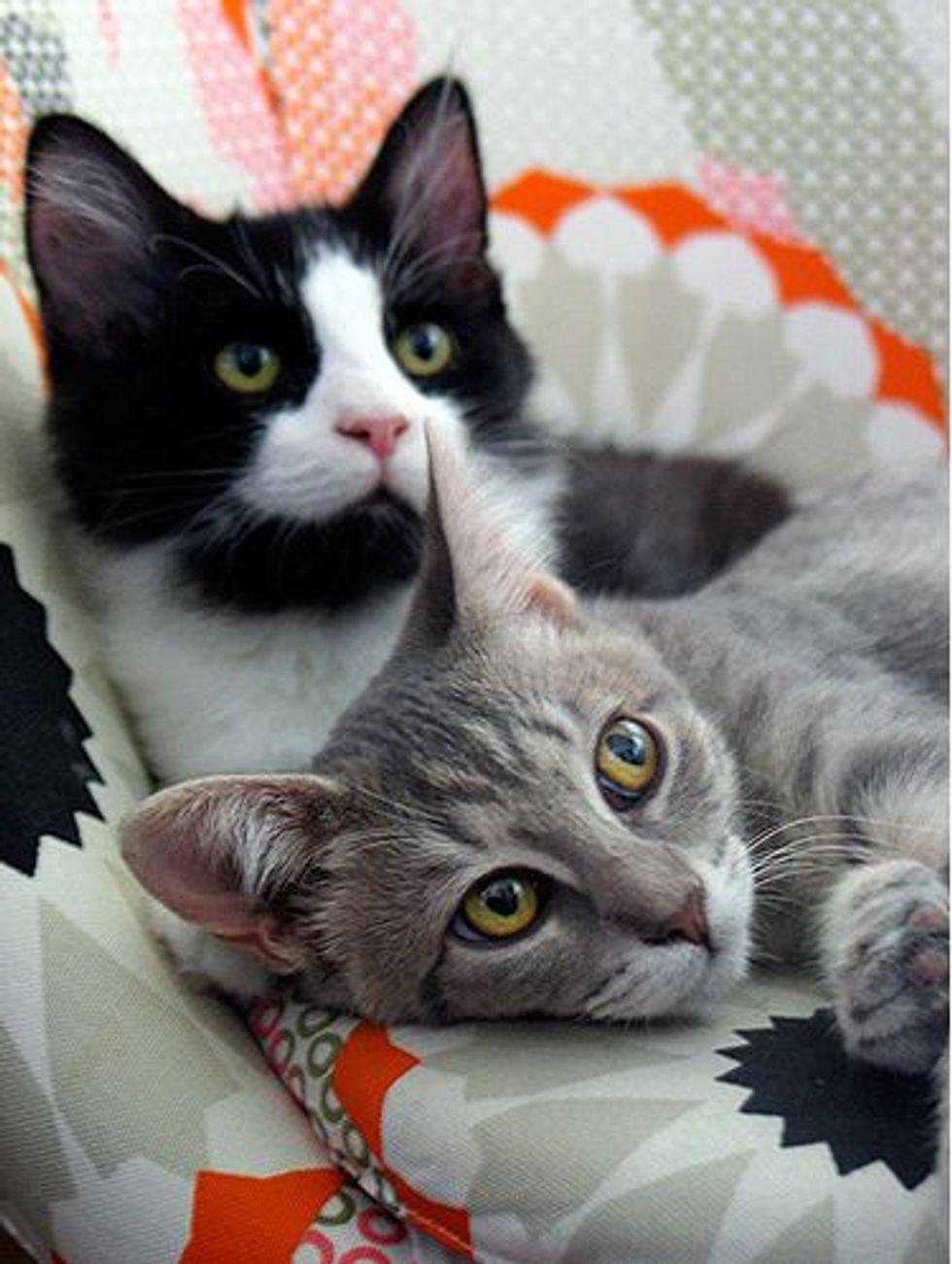 Dot and Max