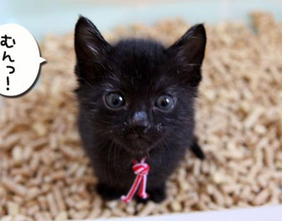 Black Foster Fur Babies