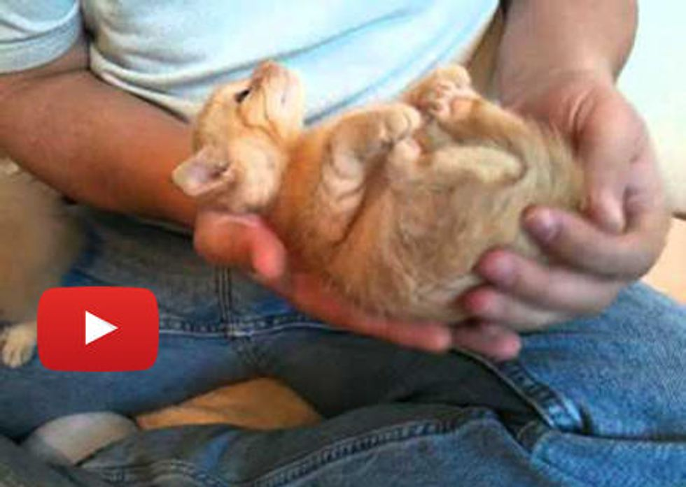 Kitten Is Hypnotized By Ear Scritches