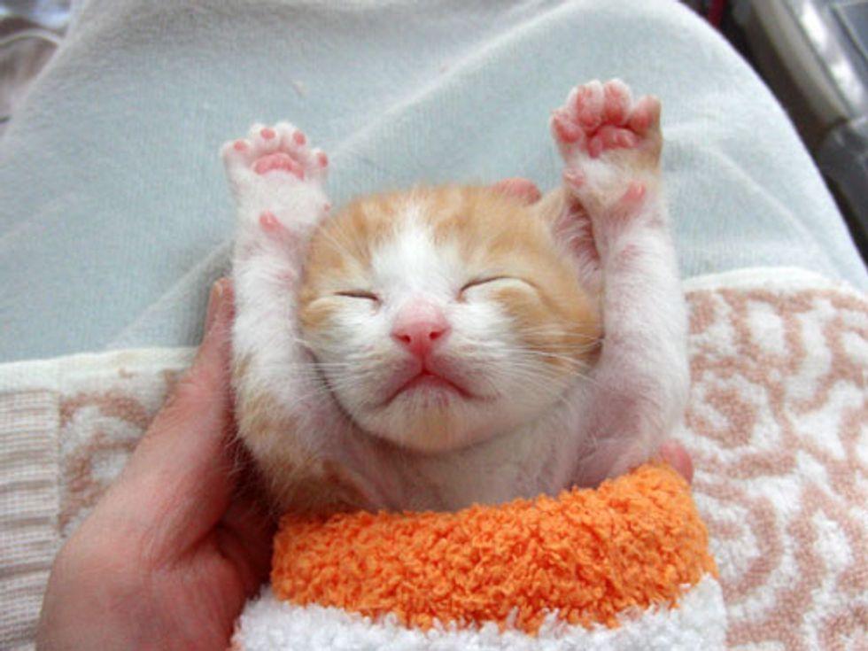 Little Rescued Ginger Minoru