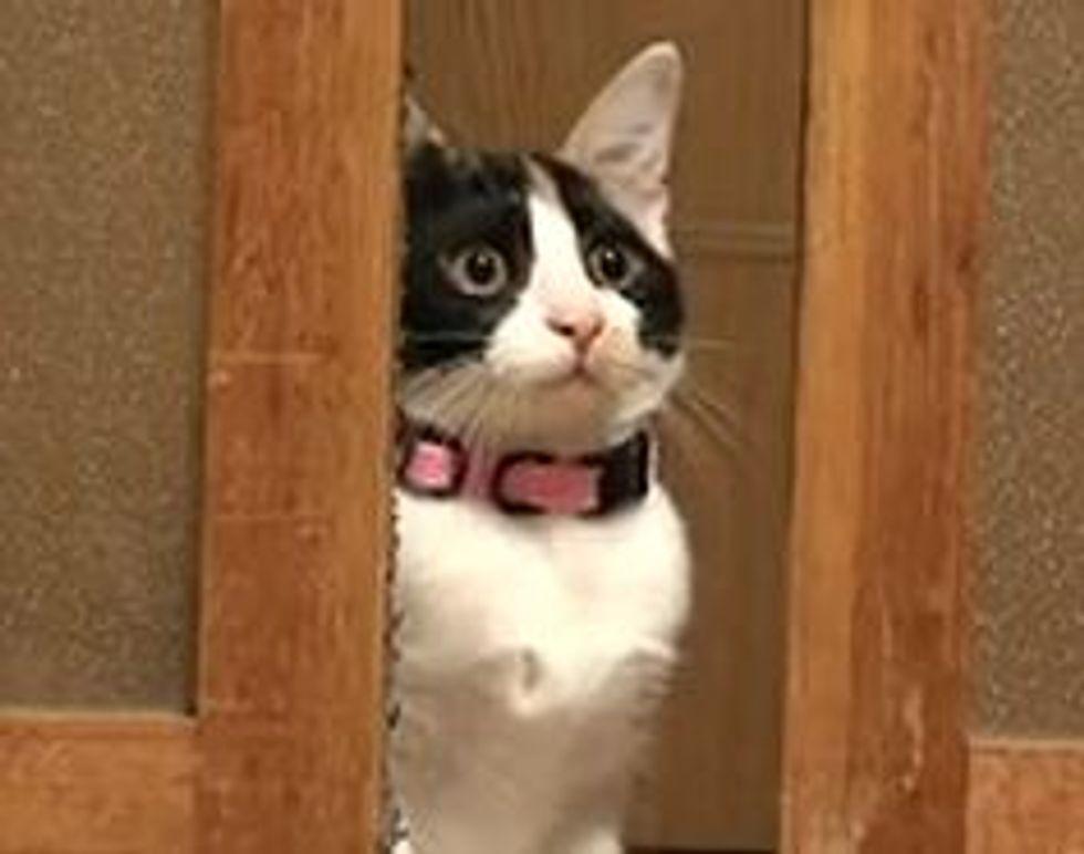 Hana, the Curious Calico Kitten
