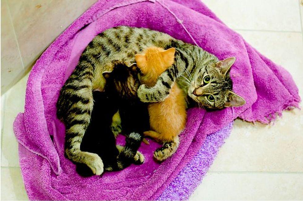 Cat Mama Adopts Orphaned Ginger Baby