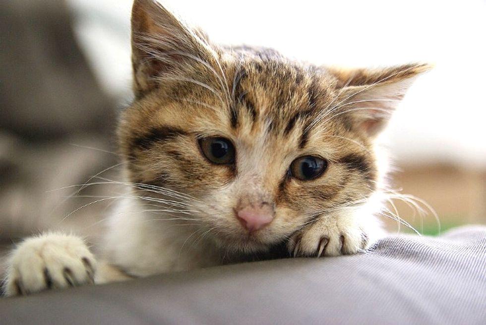 Homeless Kitten Found Saving Grace