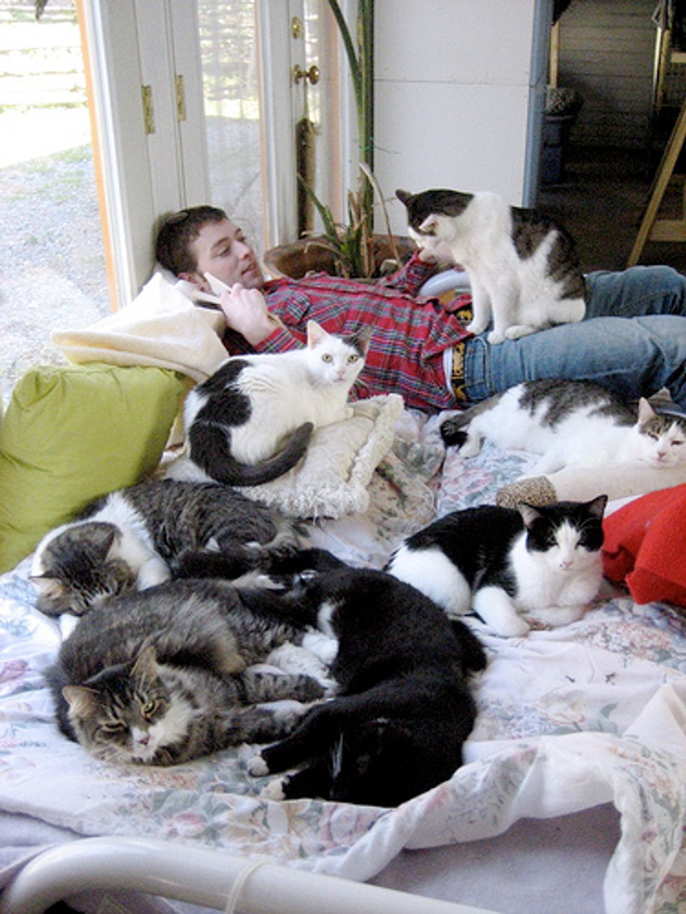 The Goathouse Refuge, Cage-Free Cat Sanctuary