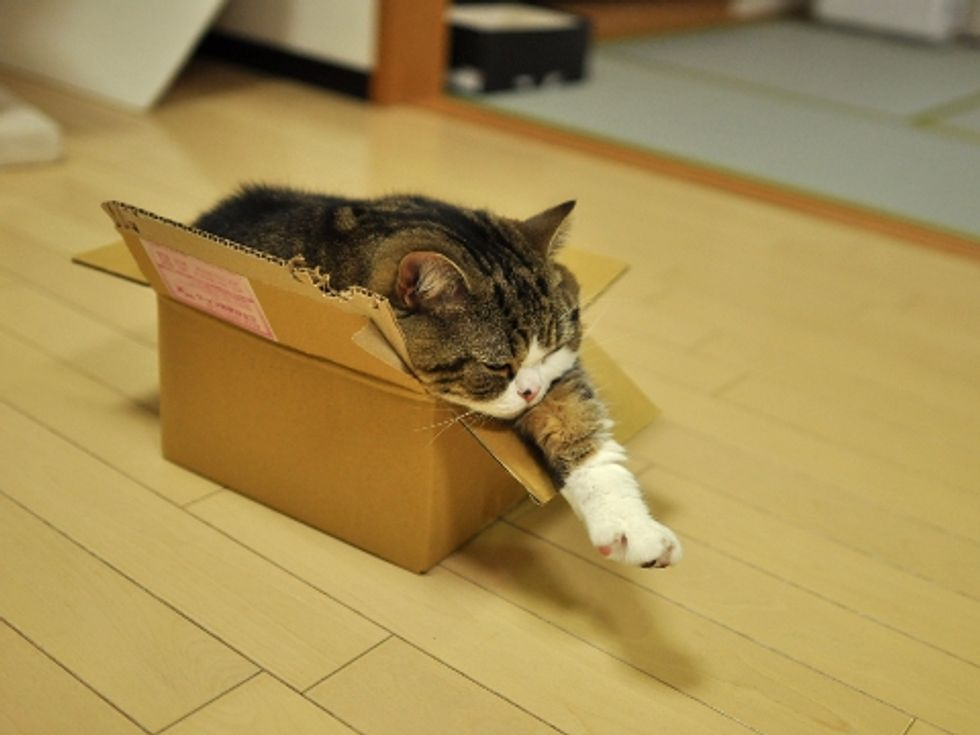 No Box is Too Small for Maru