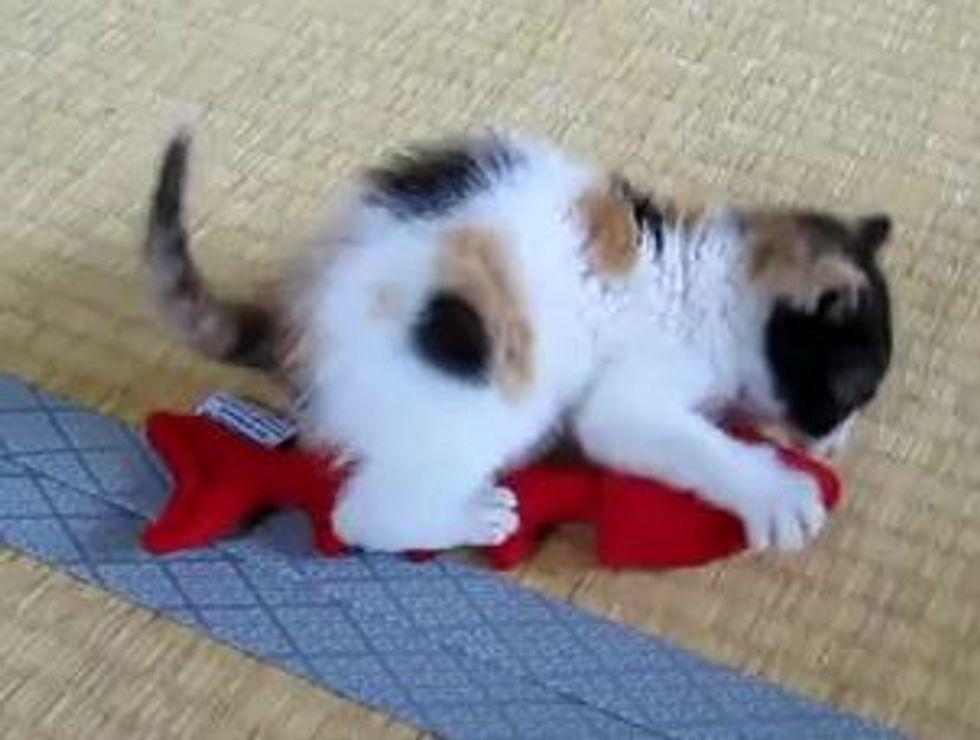 Kitten Hunts Her Fishy