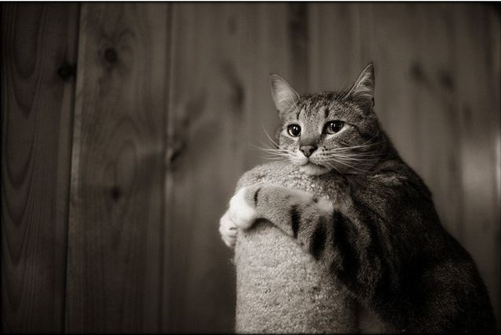 Cat Loves Scratching Post