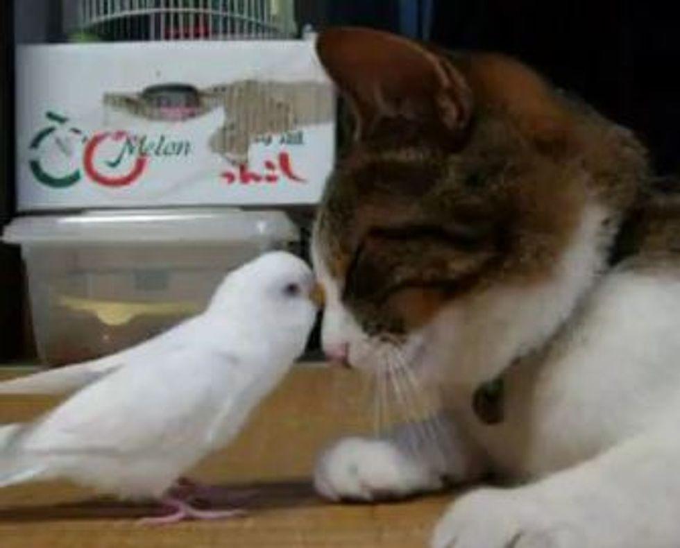 Cat and Bird Best Buddies