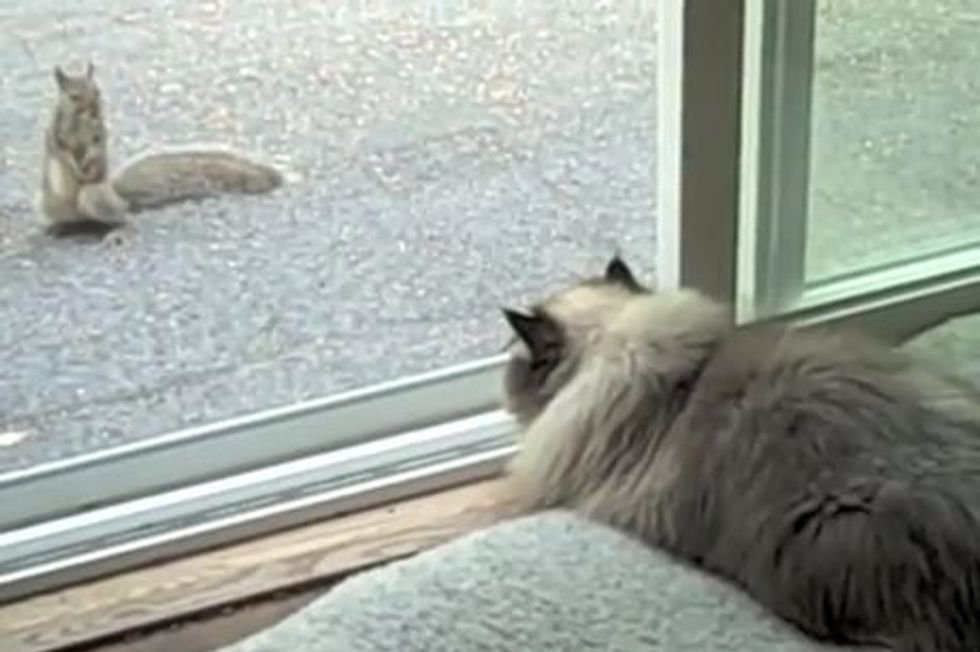 Cat vs Squirrel in a Staring Contest
