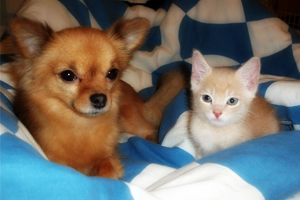 Friendship Between Tofu the Cat and Jemma the Pup