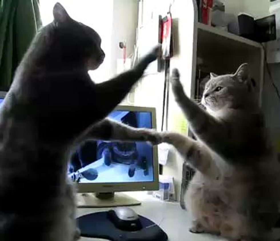 High-fiving Kitties