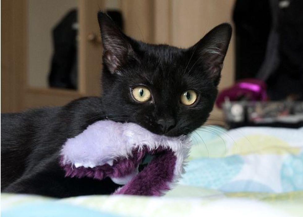 Story of Neko the Adorable Black Kitty