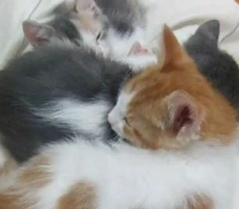 How Many Foster Kittens Are Sleeping?