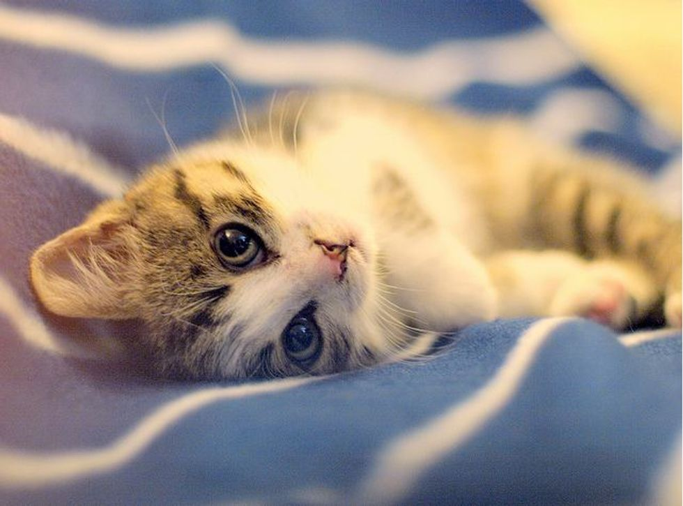 Amelie the Little Rescued Kitten