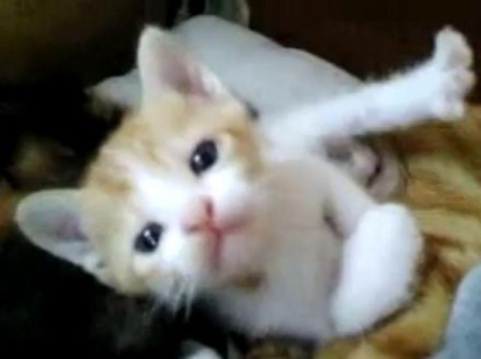 Kitten Toesie Cuteness
