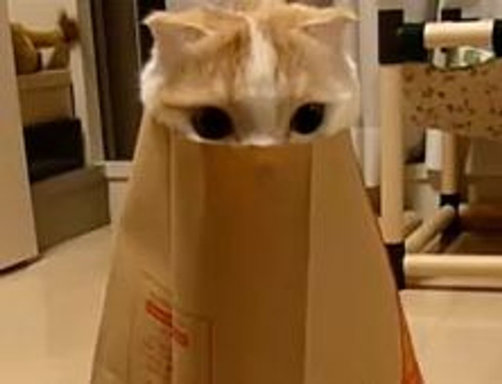 Kitty's Purrfect Hiding Spot