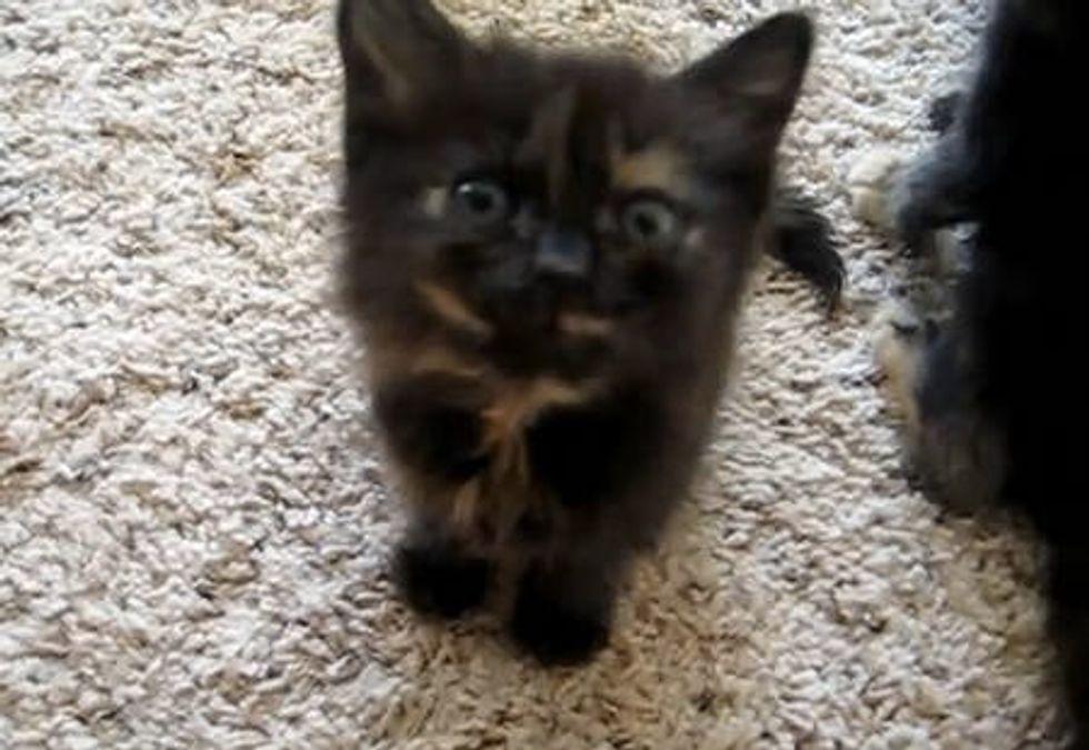 Foster Kittens Demand Food!