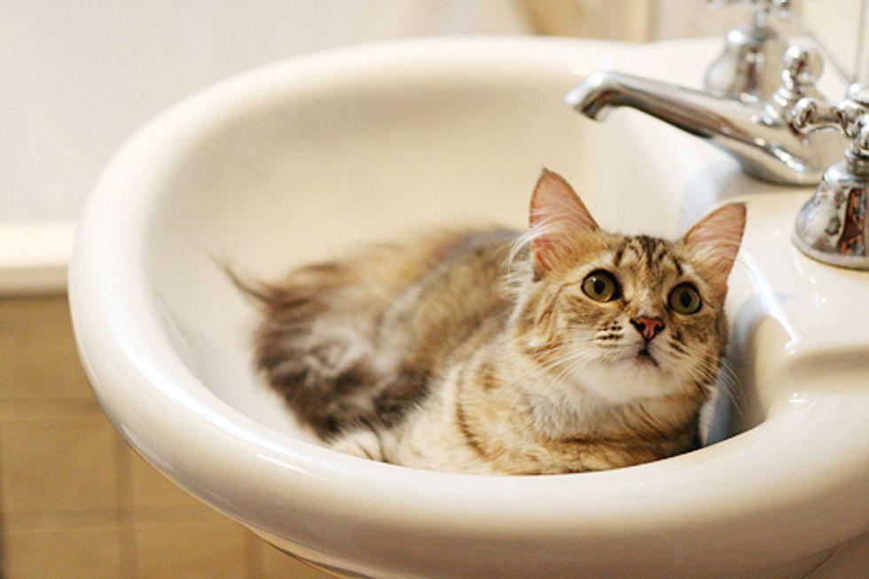 Pashmina the Bathroom Princess