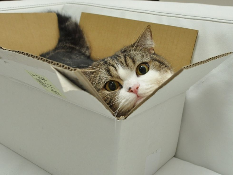 Maru and Many Too-Small Boxes