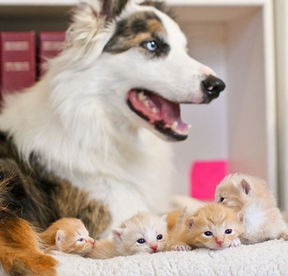 Kittens and Their Canine Babysitters