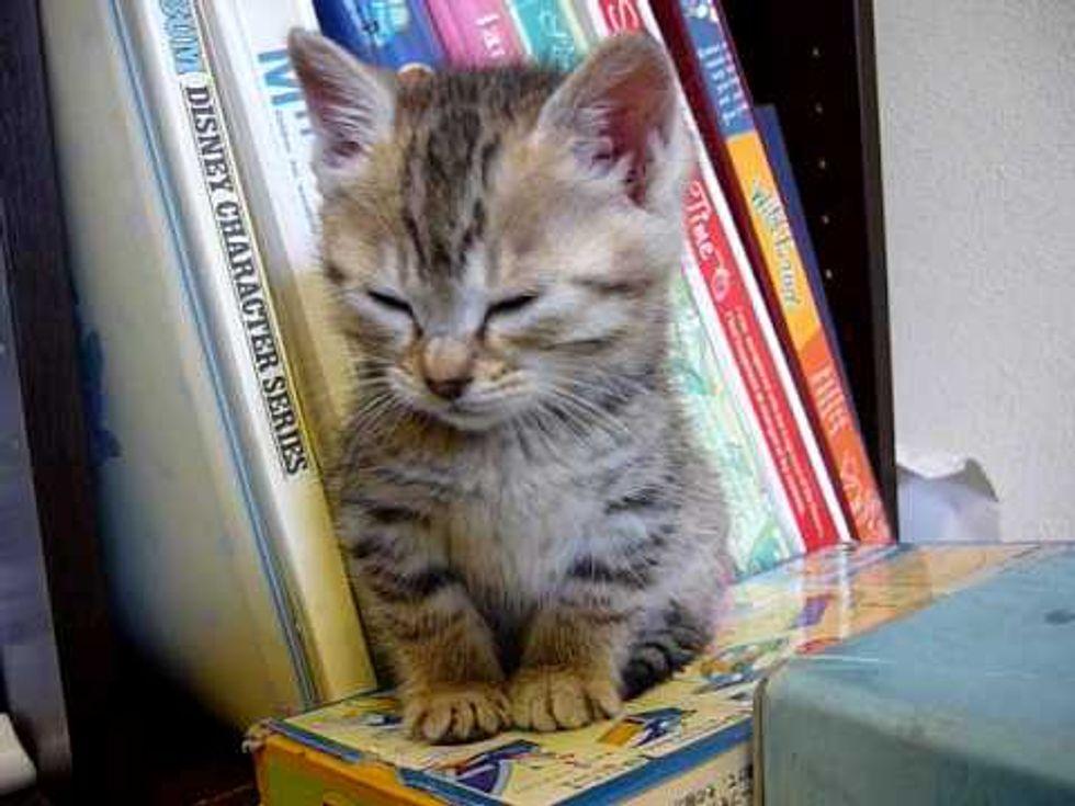 Wobbly Sleepy Kitty