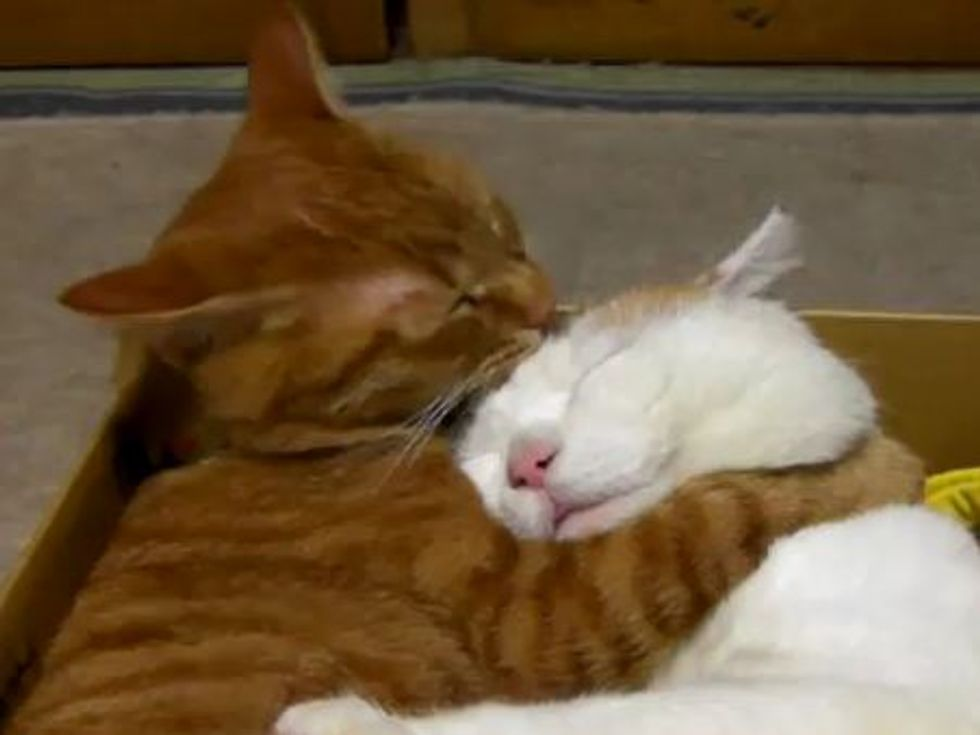 Sweet and Cuddly Kitties