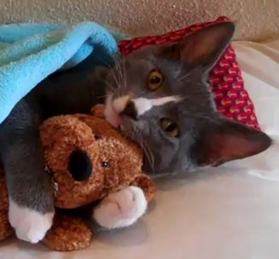 Kitten Hugs Teddy Bear