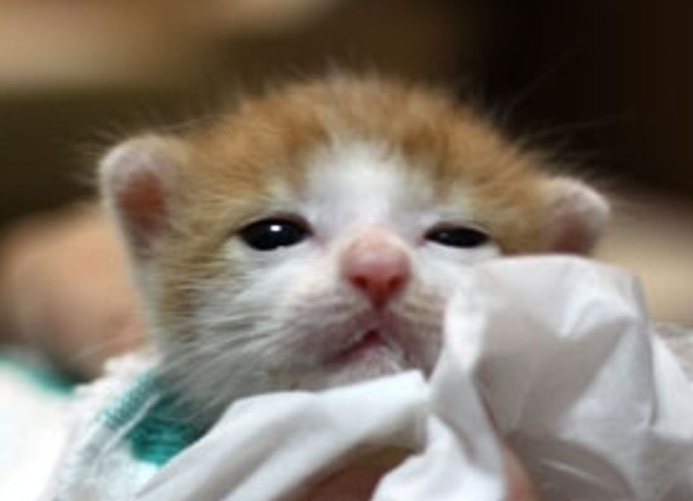 Four Kittens Rescued from a Paper Bag and Found Hope