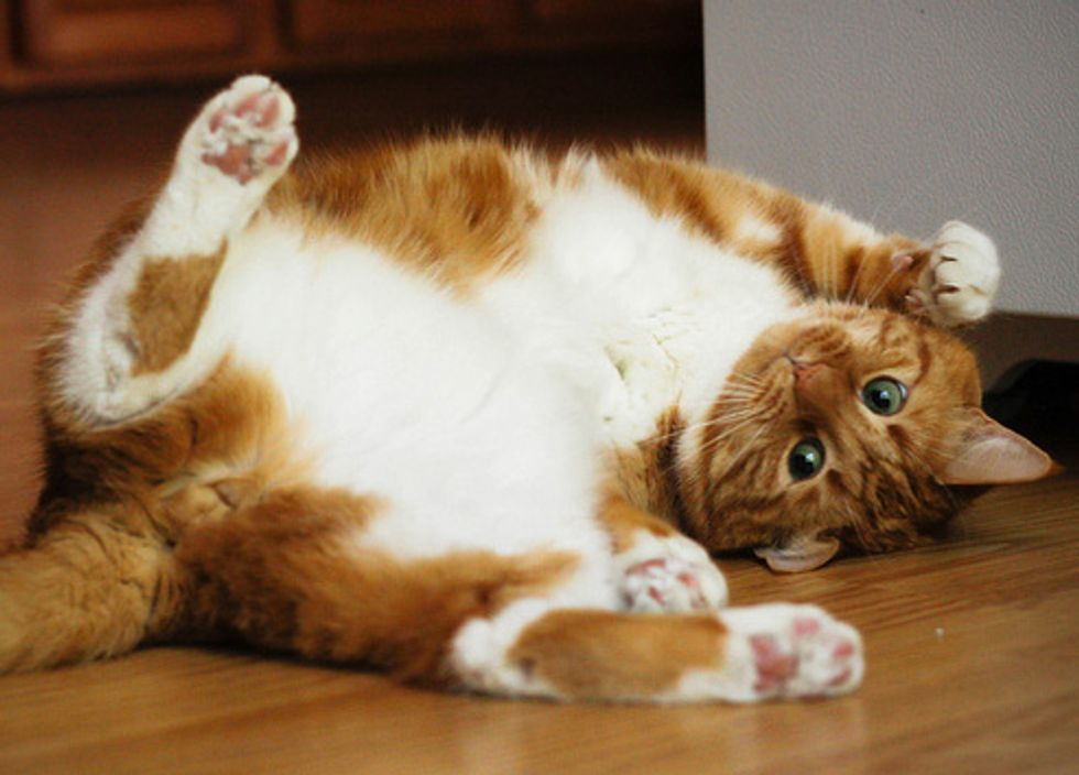Story of Francis the Curious Ginger Cat