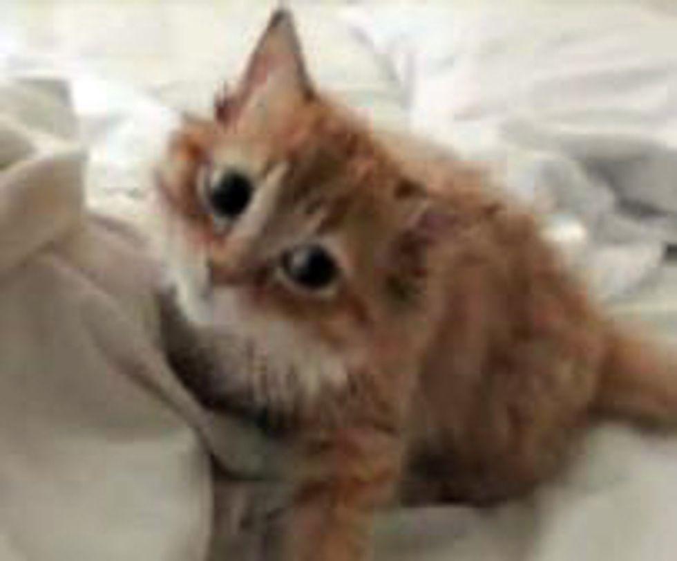 Kitten vs Duvet