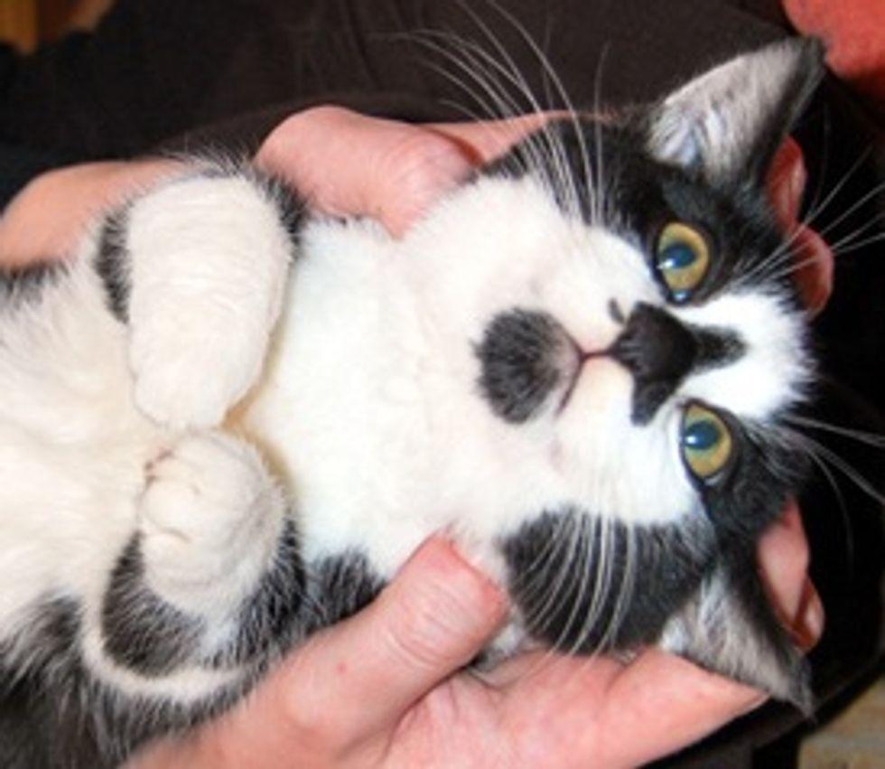 Juniper: World's Most Laid-Back Kitten
