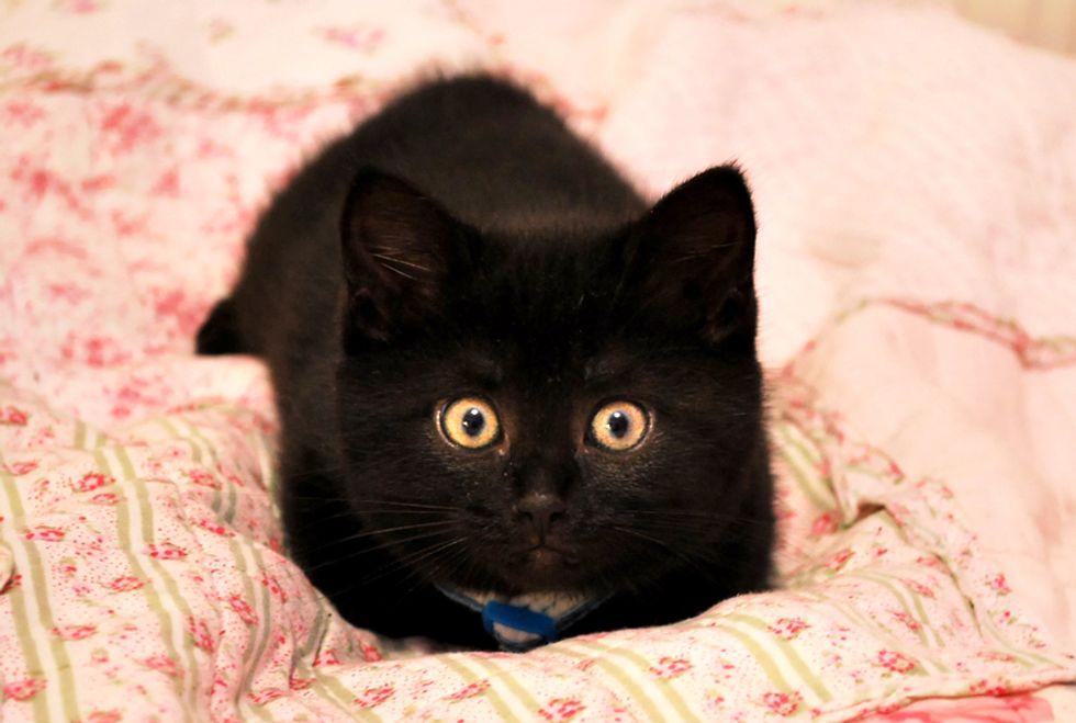 Kiwi the Little Fuzzy Black Baby