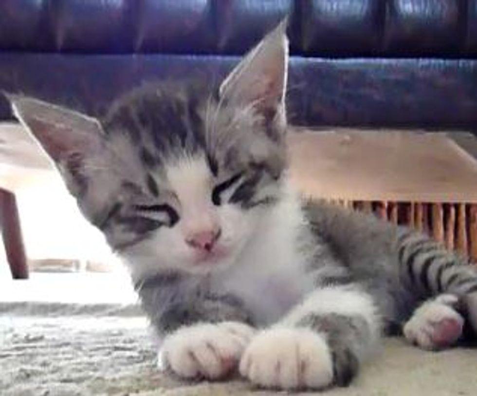 Little Kitten Falling Asleep
