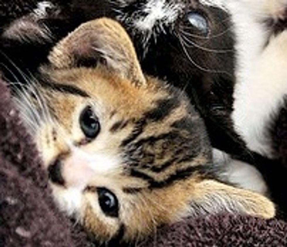 4 Little Kitties No Longer Feral