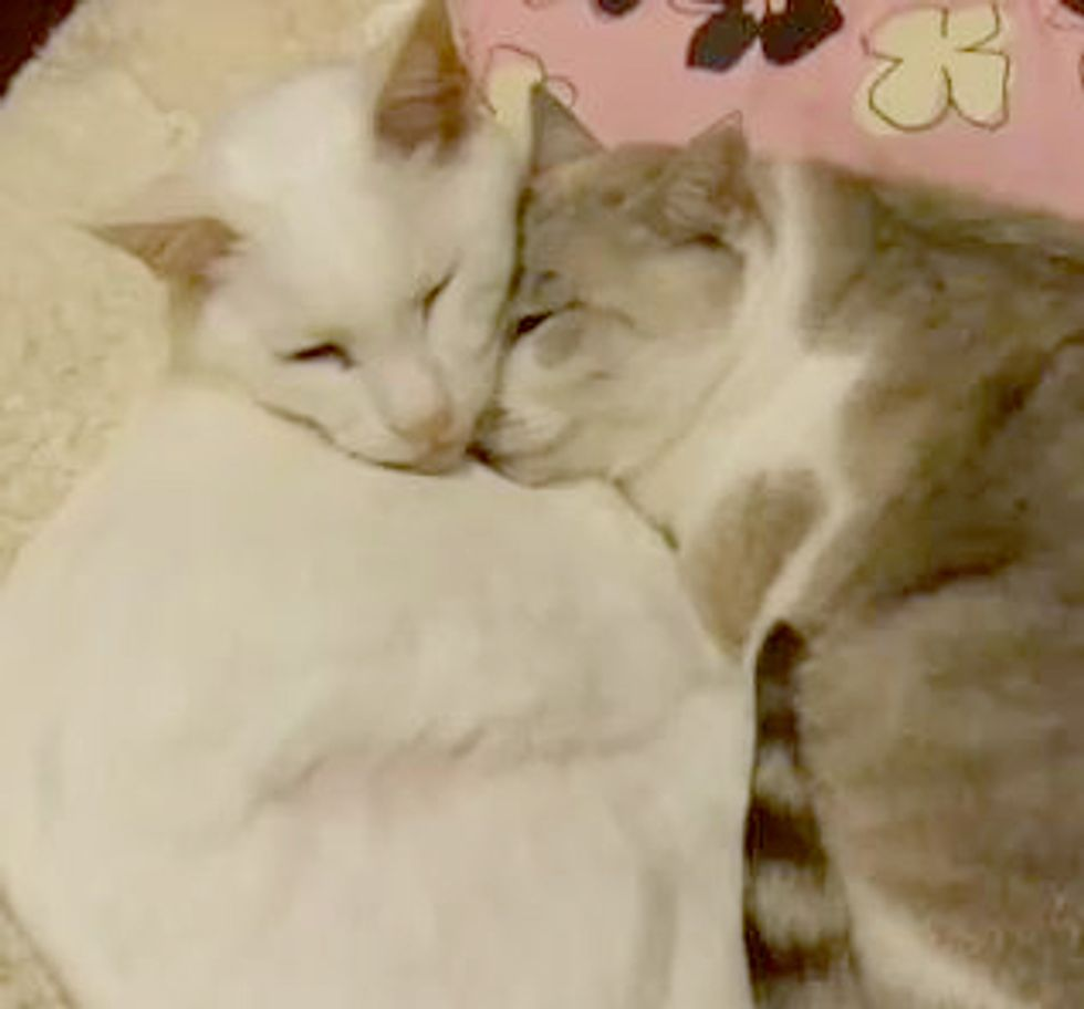 Snuggly Cuddly Kitties