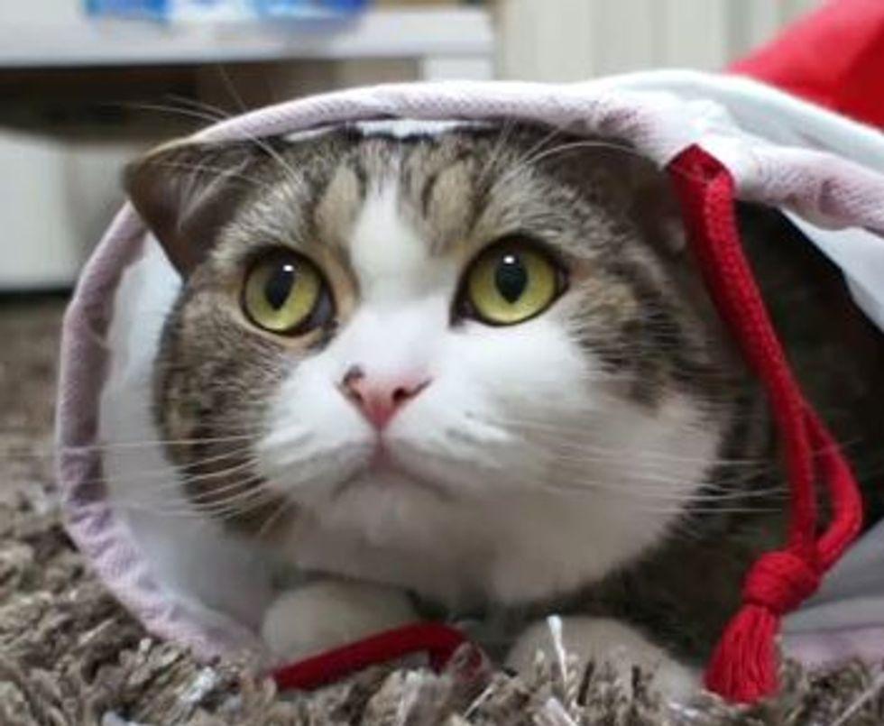 Maru and His Christmas Stocking