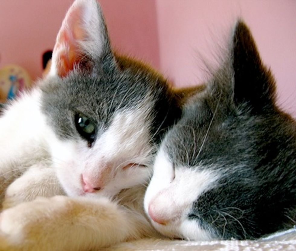 Stefanos and Vackis, Two Rescued Brothers