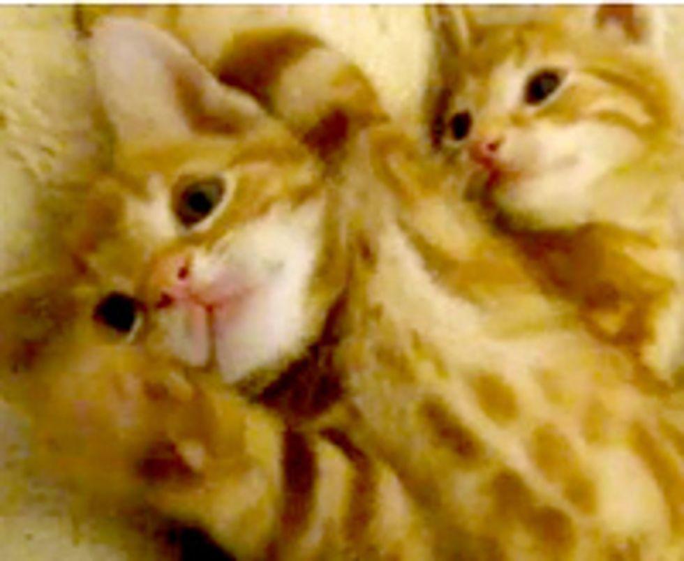 Happy Purry Little Foster Kitties