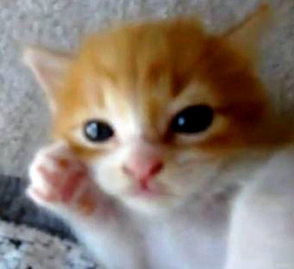 Cute Little Dreamy Kitten