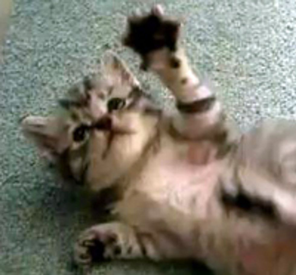 Kitten Fights Invisible Intruder