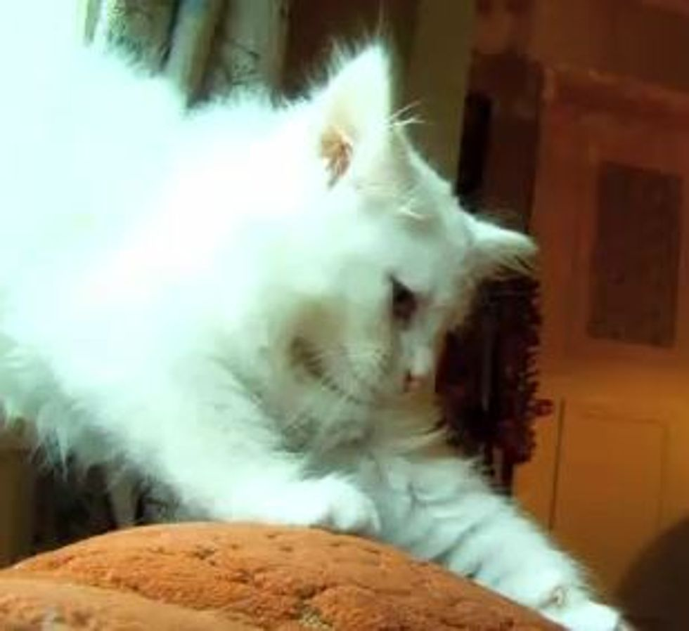 First Ever Movie Filmed Entirely by Cats