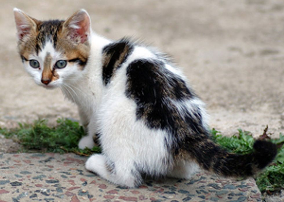 Why Is It Better to Adopt a Cat from the Shelter?