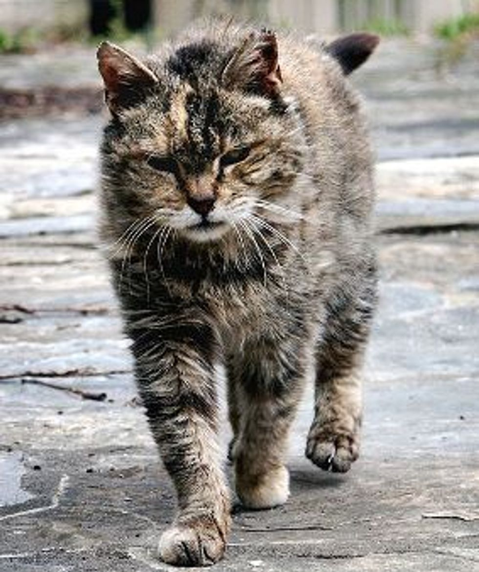 """""""Church Agrees to Allow Feeding of Feral Cats"""""""