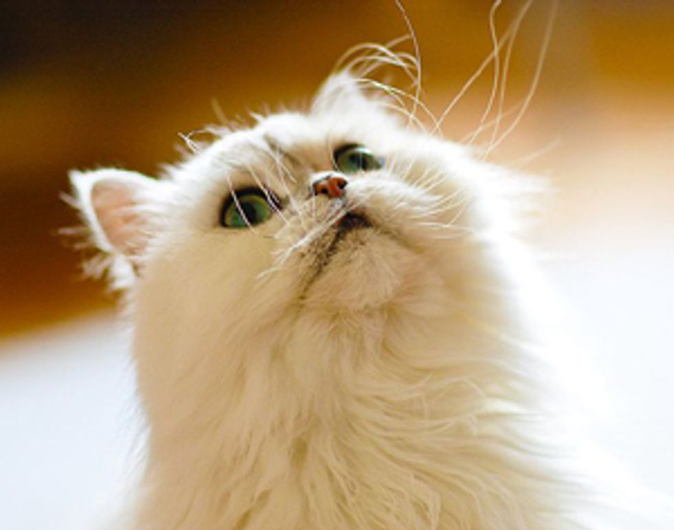 Things You should Know as a Savvy Cat Owner